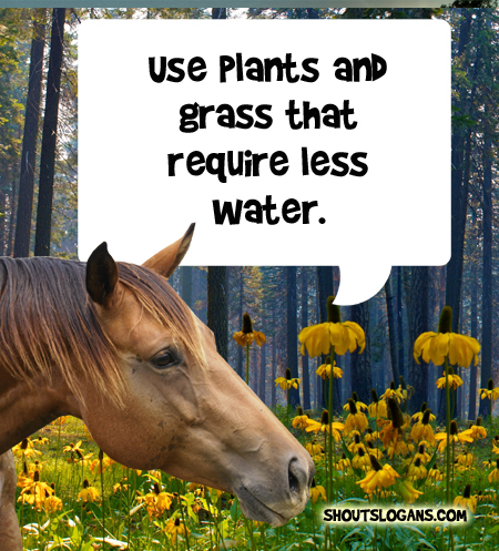 Use plants and grass that require less water.