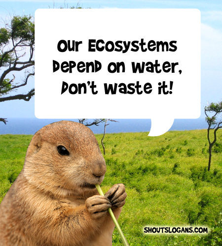 Our Ecosystems depend on water, don't waste it.